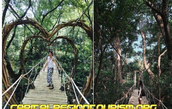 kinh nghiệm đi công viên ozo treetop park